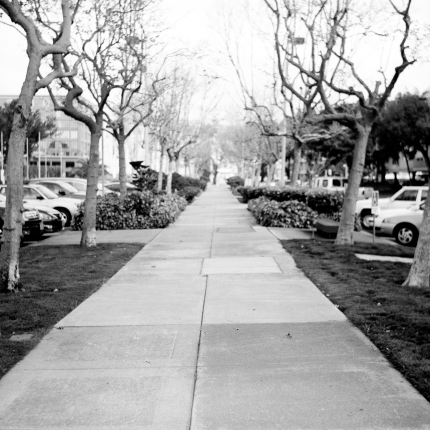 Walkway to Embarcadero West lined in maple trees.